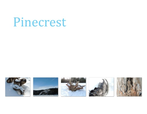 pinecrest collage copy
